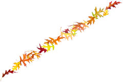 Line of autumn leaves Stock Image