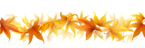 Line of autumn leaves. Autumn maple leaves falling in line isolated on white Royalty Free Stock Photo