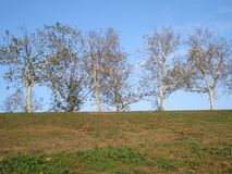 Line of autumn trees. On a hill Royalty Free Stock Photo