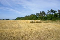 Line of Bales. Row of large round straw bales sitting on the edge of the recently harvested field in north Norfolk UK Stock Photo
