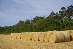 Line of Bales. Row of large round straw bales sitting on the edge of the recently harvested field in north Norfolk UK Royalty Free Stock Photography