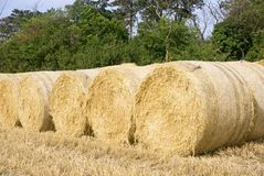 Line of Bales. Row of large round straw bales sitting on the edge of the recently harvested field in north Norfolk UK Stock Photos