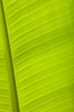 Line of banana leaf Stock Image