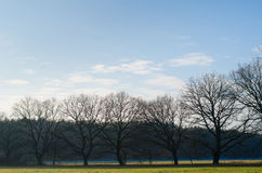 Line of bare trees in winter Stock Photo
