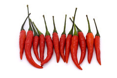 Line of birds eye chillies. Line of birds eye  chillies on a white background Stock Photos