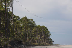 Line of birds flying over a beach Royalty Free Stock Photography