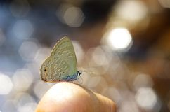 Line-blue Butterfly and bokeh. Line-blue Butterfly with the bokeh background Royalty Free Stock Images