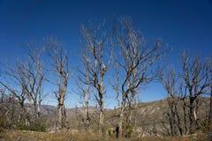 Line of Burned Trees Stock Photo