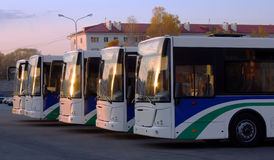 Line of buses. Line of white identical buses Stock Photo