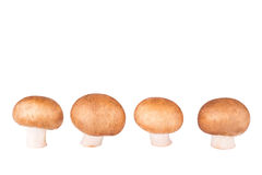 Line of champignon  isolated on white. Background Stock Photos