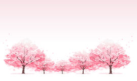 Line of cherry blossom tree background Royalty Free Stock Photos