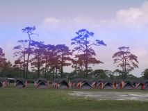 Line of colorful Tent for Tourist stay with a Pine tree background at Phukradueng national park , Loei , Thailand. Line of colorful Tent for Tourist stay with a royalty free stock photos