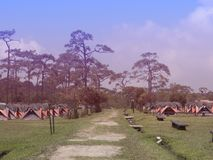 Line of colorful Tent for Tourist stay with a Pine tree background at Phukradueng national park , Loei , Thailand. Line of colorful Tent for Tourist stay with a royalty free stock photography