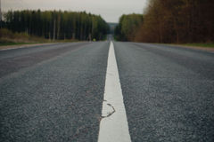 Line on the country road Stock Photography