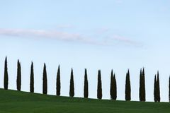 A line of cypresses following an hill profile, beneath a big, bl. Ue sky, with some sparse clouds Royalty Free Stock Image
