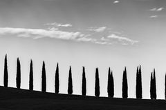 A line of cypresses following an hill profile, beneath a big sky. With some sparse clouds Royalty Free Stock Images