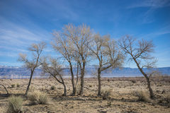 Line of Desert Trees Royalty Free Stock Images
