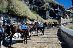 Line of donkeys in Santorini, Greece. Line of donkeys in Fira on the Greek island of Santorini Royalty Free Stock Image