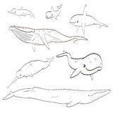 Line drawing cartoon whales collection Royalty Free Stock Photos