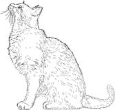 Line drawing cat  Royalty Free Stock Photo