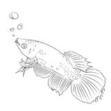 Line Drawing of Fighting Fish Cartoon -Simple line Vector Stock Image