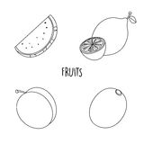 Line drawing fruits Royalty Free Stock Photo
