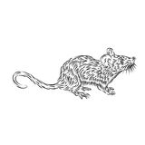 Line Drawing of a house mouse. An abstract illustration of a mouse Stock Images
