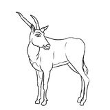 Line Drawing of Impala -Simple line Vector. Hand drawn sketch of Impala Deer Cartoon isolated, Black and White Cartoon Vector Illustration for Coloring Book Royalty Free Stock Photos