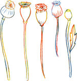 Line drawing poppy stalks Stock Images