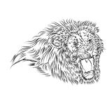 Line Drawing of a roaring lion Royalty Free Stock Photos