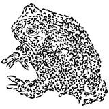 Line Drawing of Wyoming Toad Stock Photo
