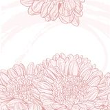Line drawings pink chrysanthemum background Royalty Free Stock Photo