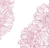 Line drawings pink chrysanthemum Royalty Free Stock Images