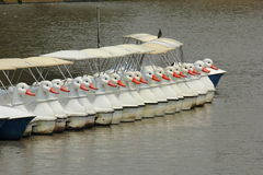 The line of duck pedal boat Stock Photo