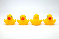 Line of ducks of gum Stock Images