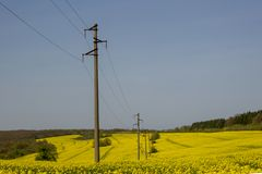 A line of electric poles with cables of electricity in a rape field with a forest in background. Horizontal stock image