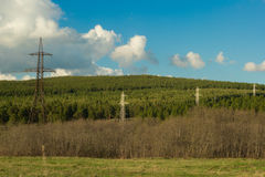 Line electricity transmission on a background of pine woods Stock Photo