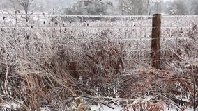 A line of fence covered in ice stock video footage