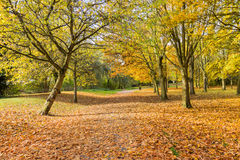 A line of fern trees in a park in Autumn time Royalty Free Stock Images