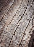 Line fissures to dry branch Royalty Free Stock Image
