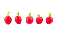 A line of five radishes on white Stock Image