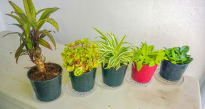 Line of Five Tree Pot Royalty Free Stock Images