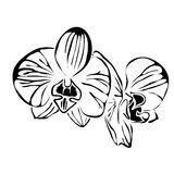 Line flower orchid vector image. Can be use for logo and tattoo Stock Images
