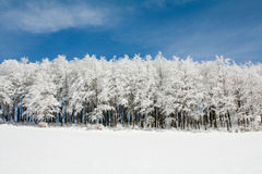 Line of Frozen trees Stock Image