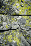 Line on a granite rock with yellow moss Stock Image
