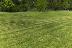 Line of grass cut in the field. Stock Photo