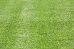 The line on the grass on the football pitch Stock Photos