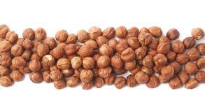 Line of hazelnuts isolated Royalty Free Stock Photo