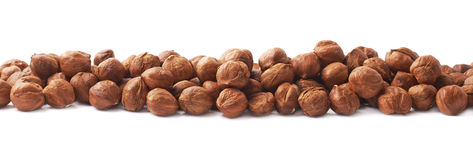 Line of hazelnuts isolated Stock Photography