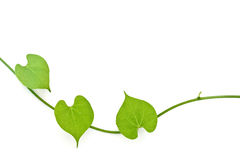Line of heart. Nature heart shape by green leaf Royalty Free Stock Photos
